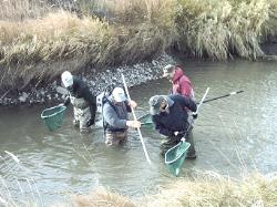 Click photo for trout rescue story.